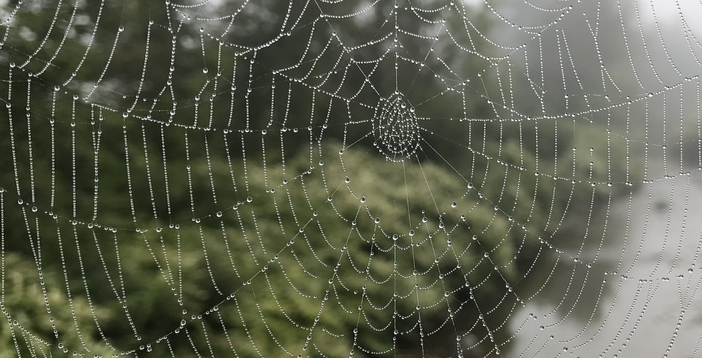 Dew highlights complexity in a spider web, like getting patient consent with no signature
